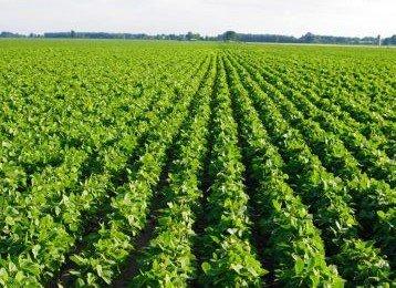 Технології рослинництва